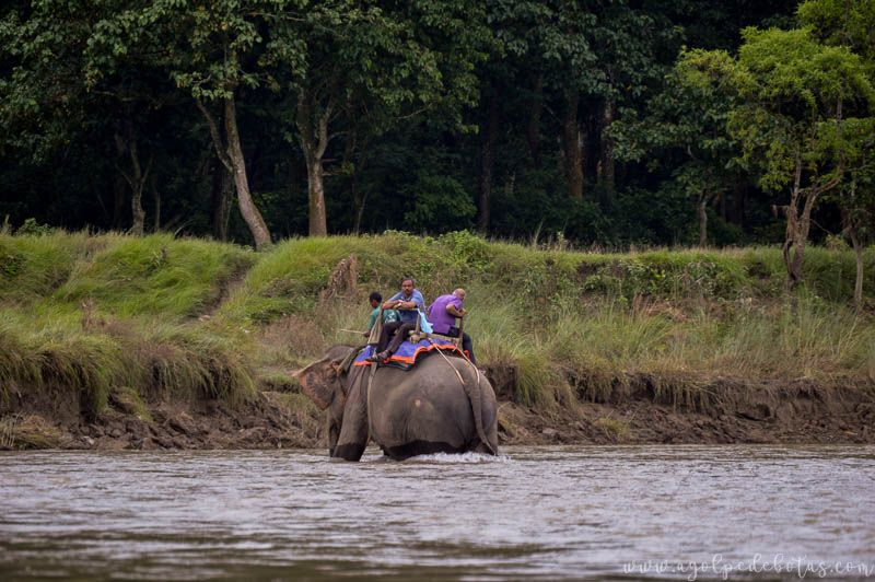 Safari Chitwan